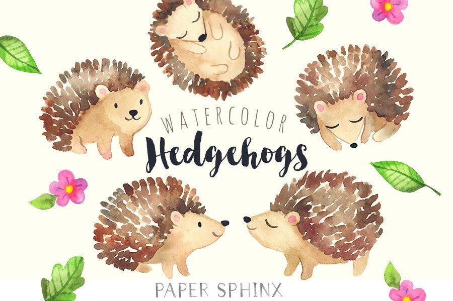 Watercolor Hedgehogs Clipart Baby Forest Animals Woodland Hedgehog Clip Art Scrapbook Nursery Art Digital Instant Download Pngs Baby Clip Art Clip Art Nursery Art