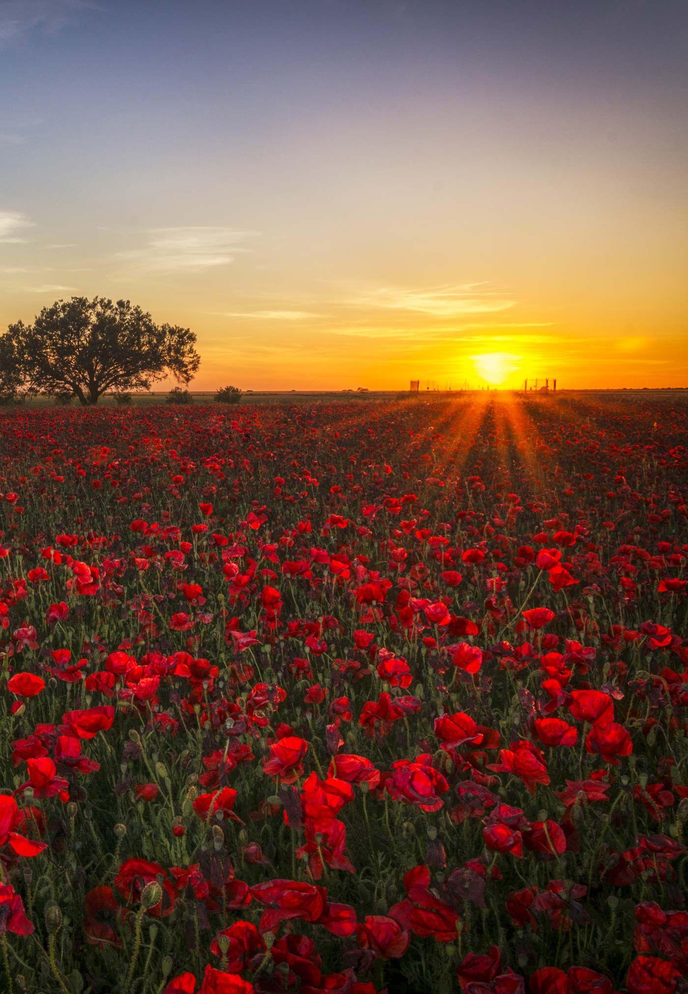 The 45 Most Beautiful Sunset Photos | Beautiful Pics ...