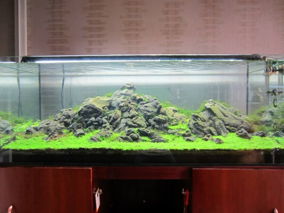 Red Highland Substrate   Timeline. AquascapingHighlandsTimelineAquariumsScottish  Highlands