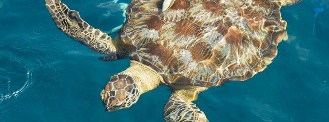 Bayok Création - De l'écologie en Polynésie : Te Mana o Te Moana - lire la suite sur www.bayokcreation.com