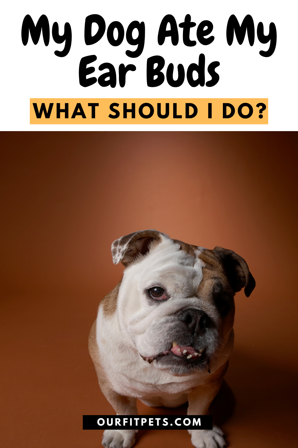My Dog Ate A Cough Drop : cough, Should, Eating,, Advice,
