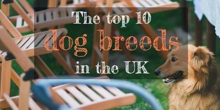 Responsible How To Train Your Dog Our Gift Top 10 Dog Breeds