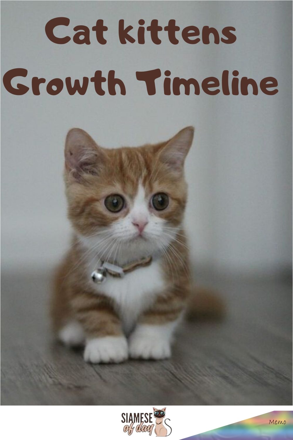 Jan 31 2020 Siamese Kittens Growth Timeline The Siamese Kitten Is Born Completely White And As They Age Their Coa In 2020 Siamese Kittens Cats And Kittens Kittens