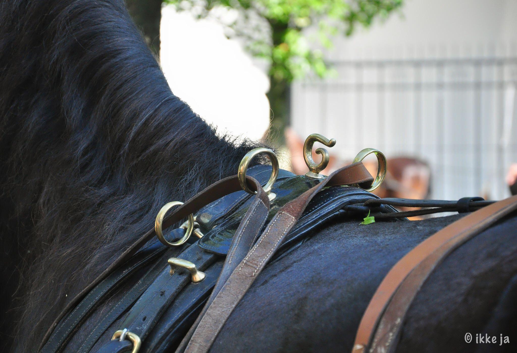 Paardenteugels