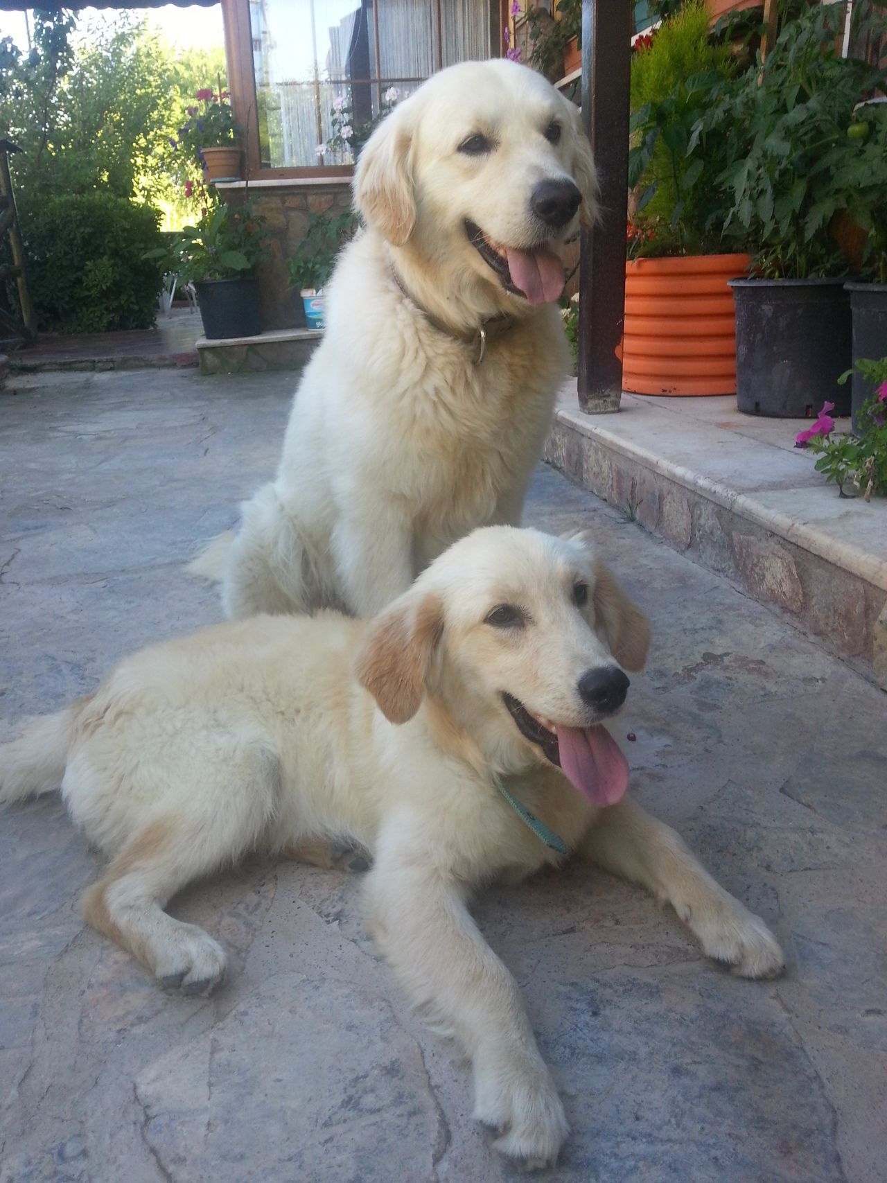 Dost Nisan From Turkey Nisan Puppy One Passed Away This Week