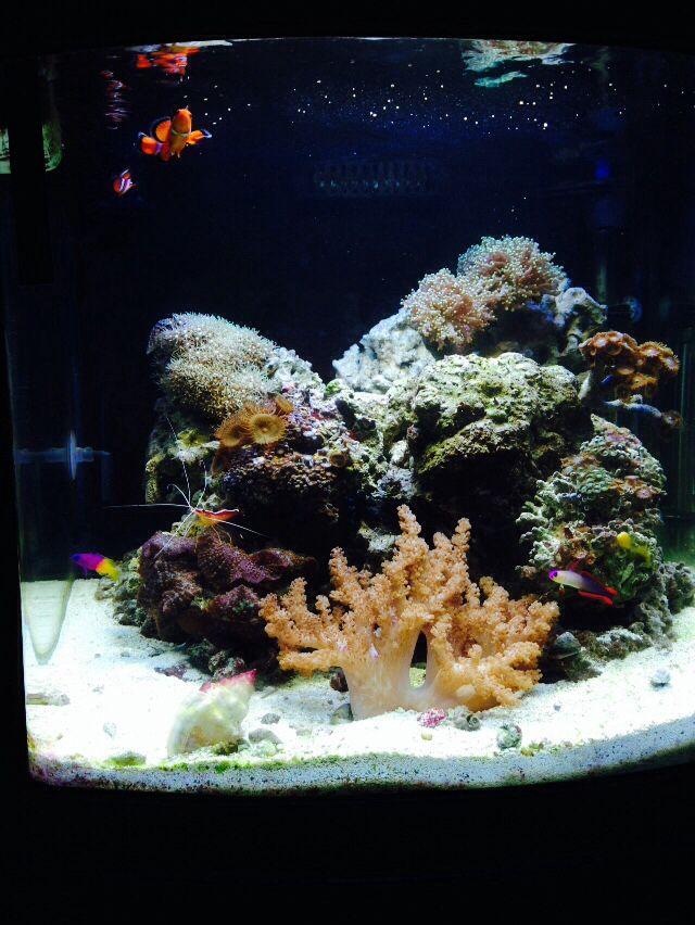 My 28 Gallon Jbj Nano Reef Aquarium Saltwater Aquarium Aquarium Reef Aquarium