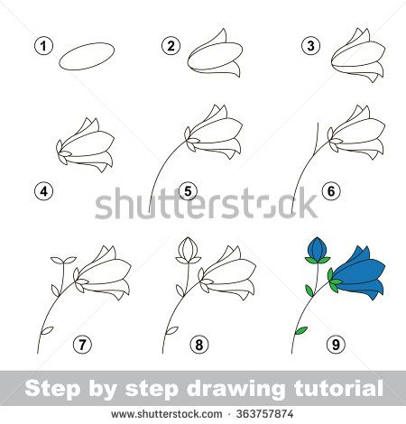 Step by step drawing tutorial vector kid game how to draw a bluebell flower stock vector