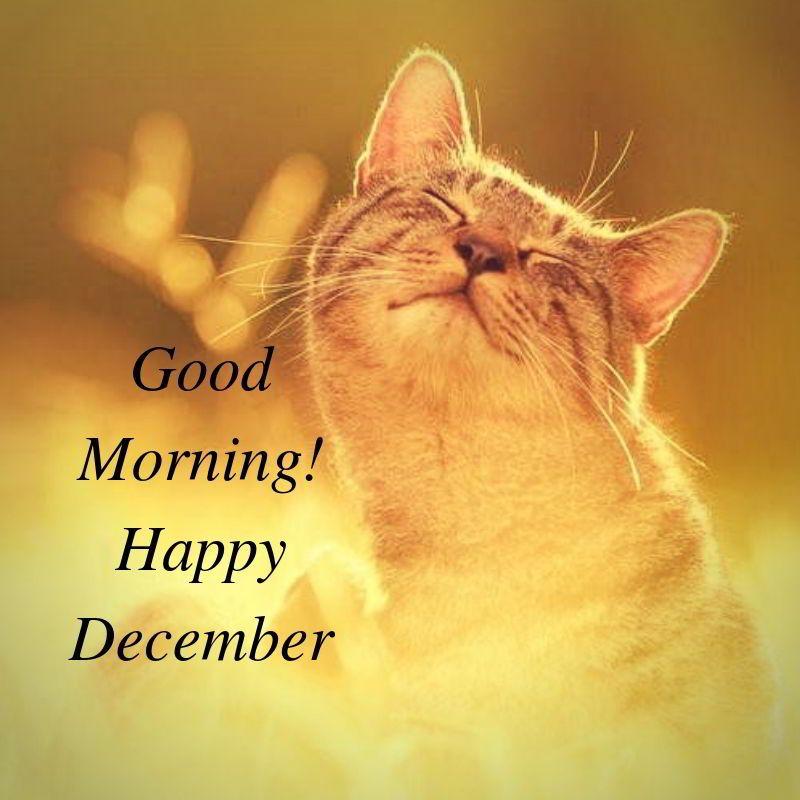 Cats Memes Happy December Cat Lovers Cat Memes