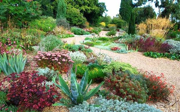Simply stylish The Beth Chatto Gardens Gravel garden Gardens