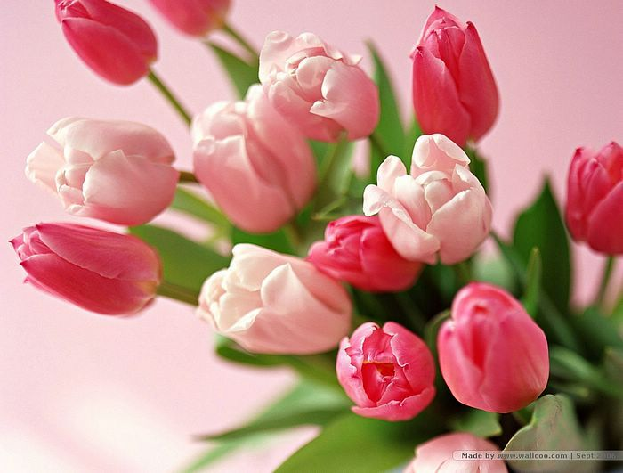 Pink and Red Tulips Bouquet