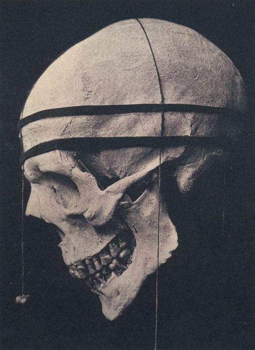profile skull