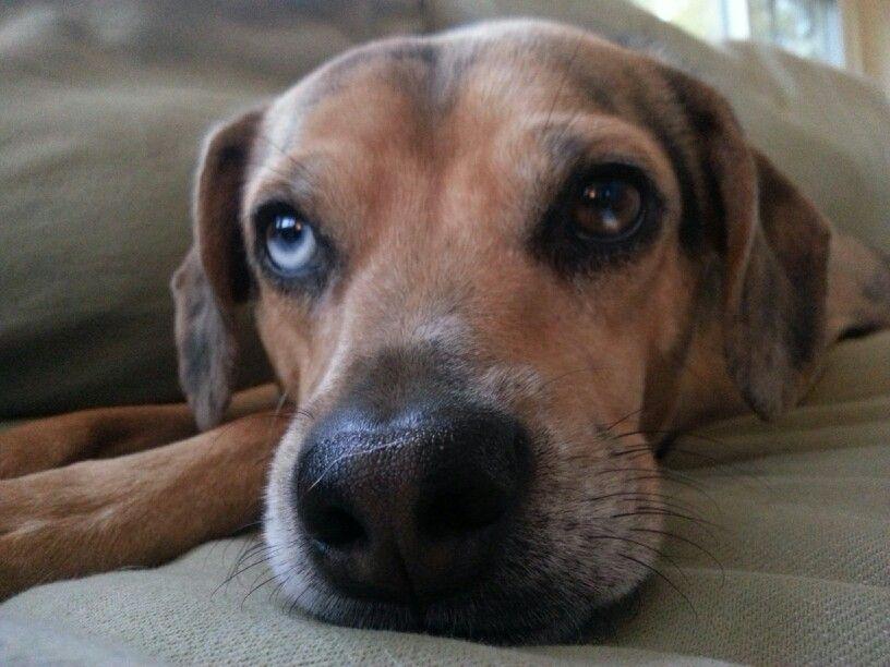 Pretty eyed puppy