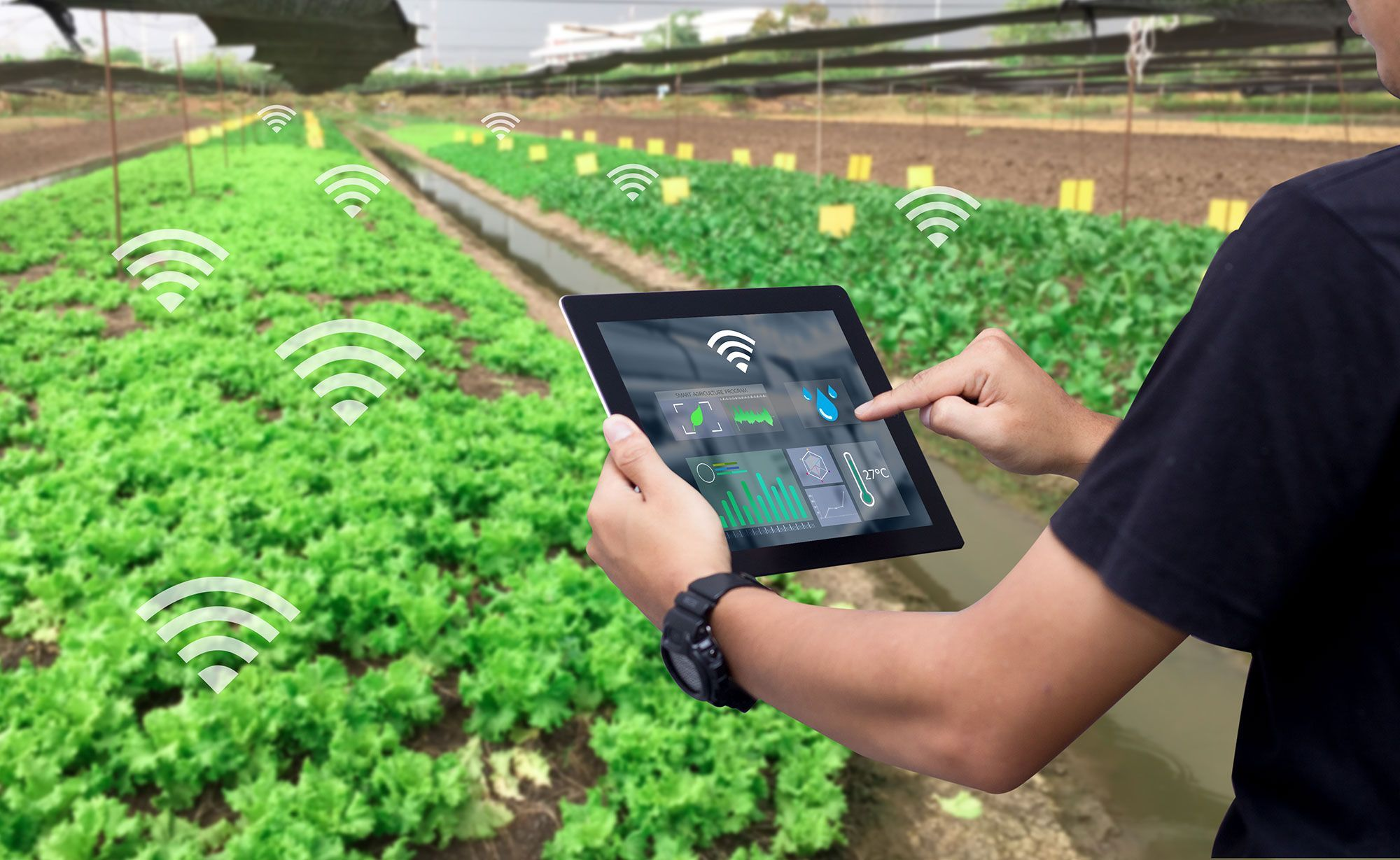 5 New Iot Applications In Agriculture Agriculture Photography Agriculture Agriculture Design
