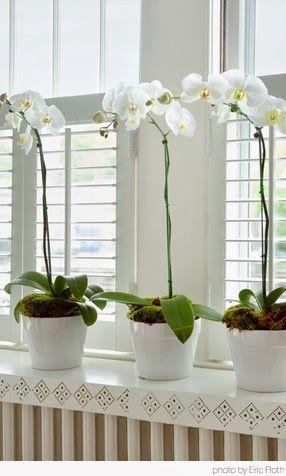 Paixão Por Orquídeas Depósito Santa Mariah White Orchidswhite Flowersgrowing
