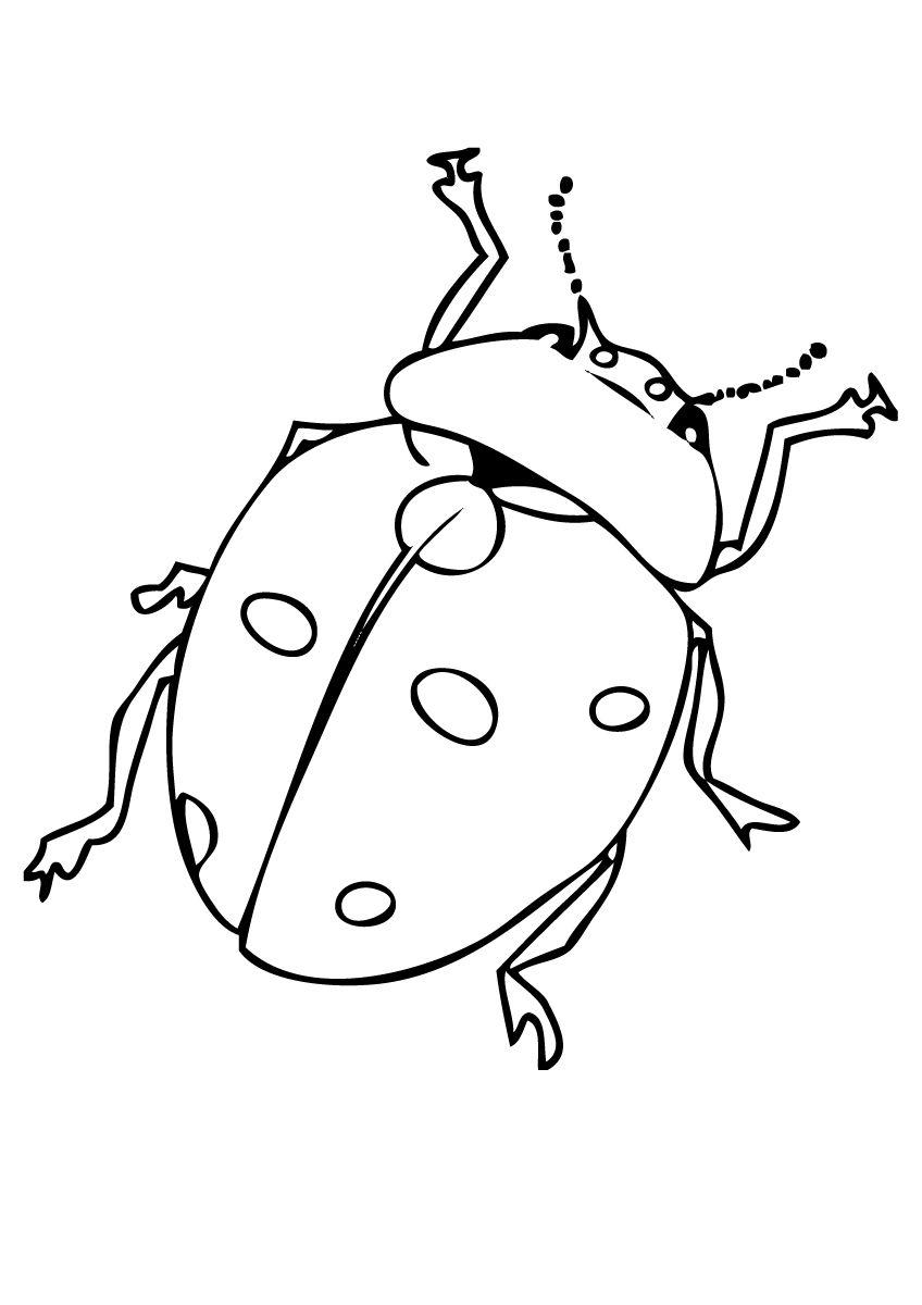 Ladybugs Coloring Page Free Printable For Kids Ladybug Coloring Page Bug Coloring Pages Ladybug Coloring Page Free Printable