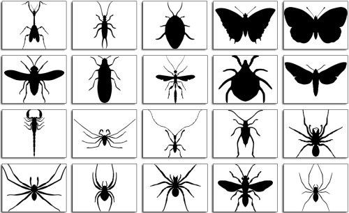 some vector images i love of bugs