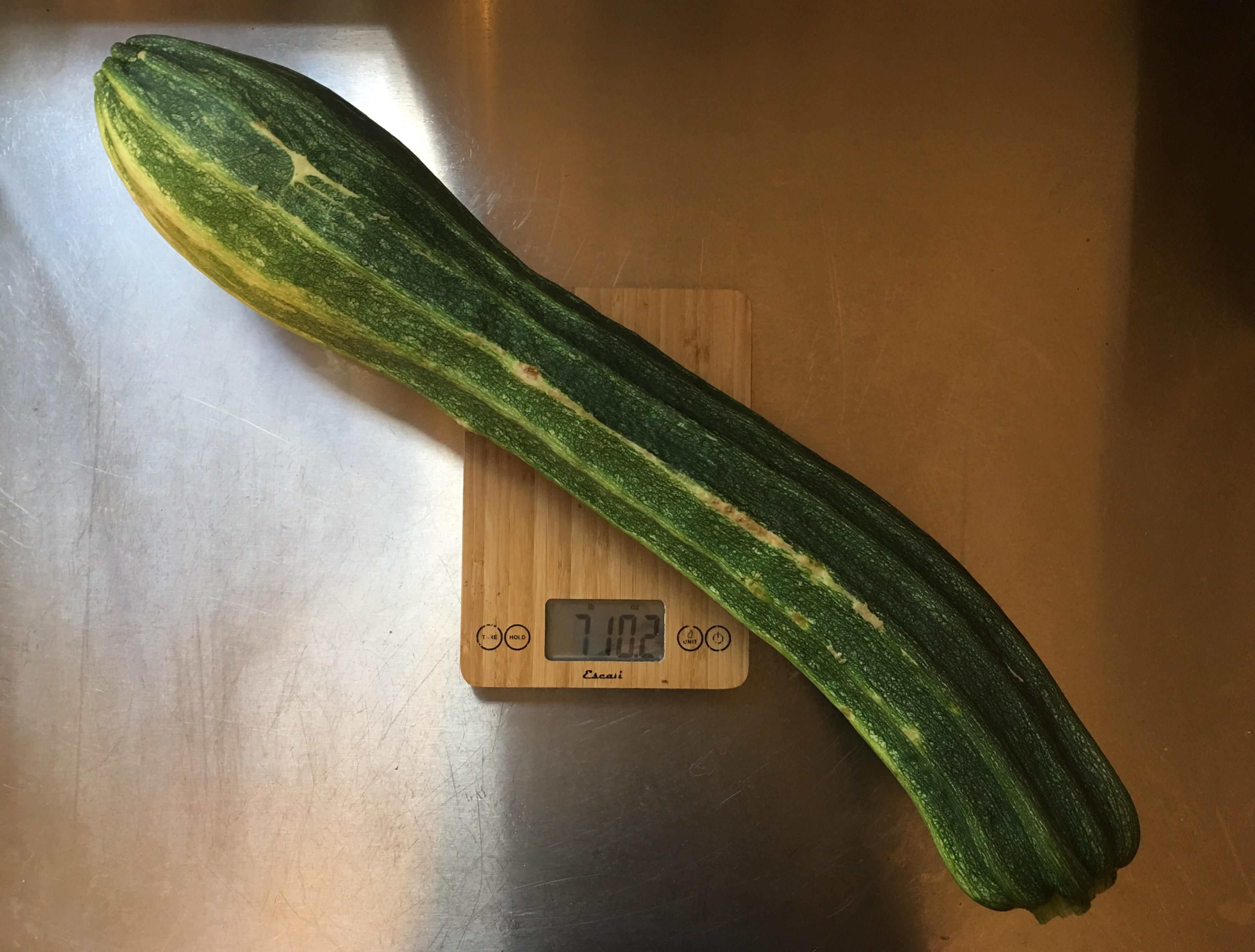 7 1/2 pound zucchini?! #gardening #garden #DIY #home #flowers #roses #nature #landscaping #horticulture