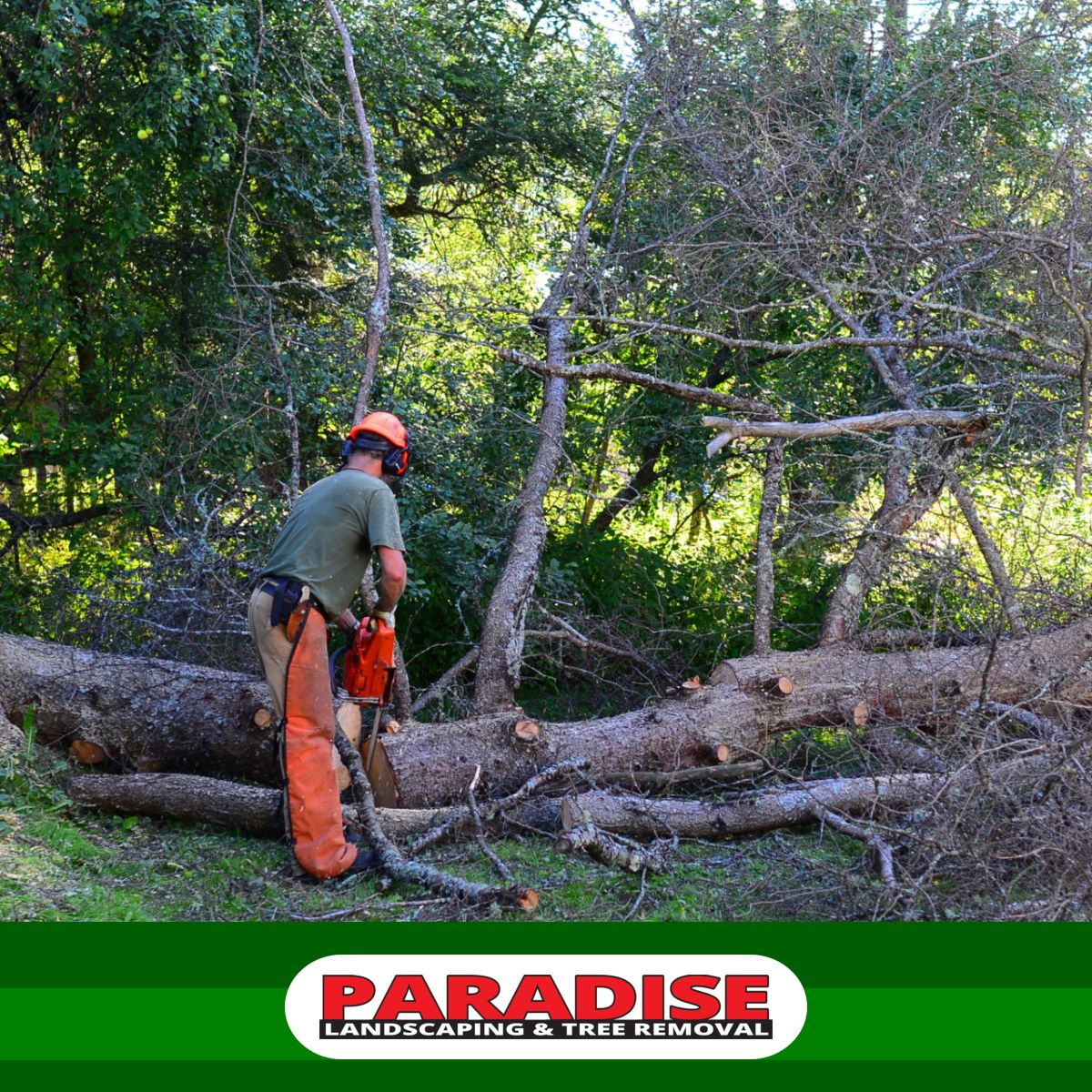 A tree removal company should be able to provide you with
