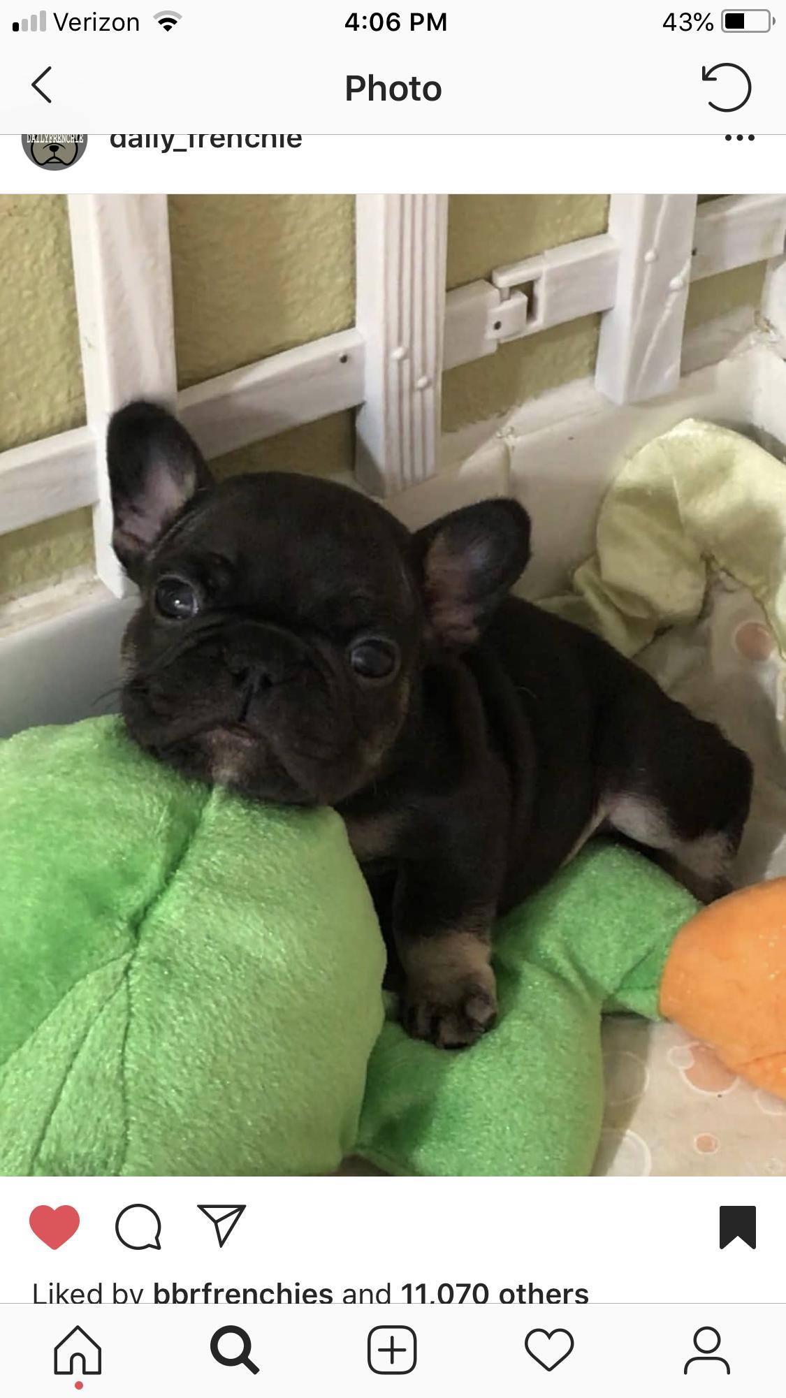 Dogs Of Instagram Lnstadogclub Instagram Posts Videos Stories