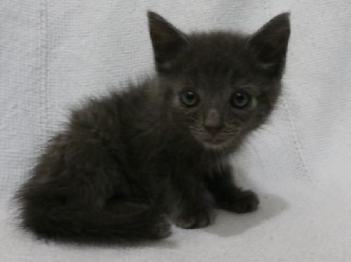 Our Shelter Is Located At 213 E William Thomason Byway Leitchfield Ky 42754 The Shelter Is Open Daily From 8 00am To 12 Kitten Adoption Animals My Animal