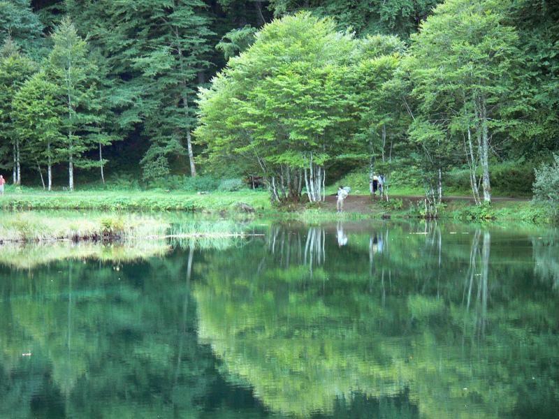 Le lac de Bethmale (Pyrénées) Situé à 1074m d'altitude, dans le Couserans, au coeur du Parc Naturel Régional des Pyrénées Airégeoises, ses rives sont accessibles aux promeneurs été pour hiver et bénéficient d'un cadre naturel magnifique.