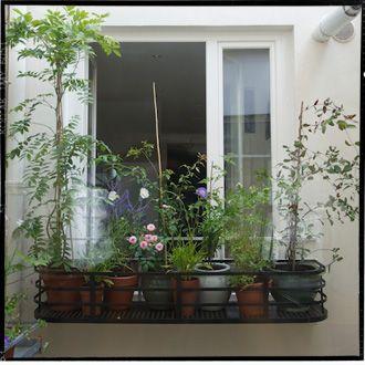 le vert soi jardini re de fen tre pinterest les verts vert et jardini res. Black Bedroom Furniture Sets. Home Design Ideas