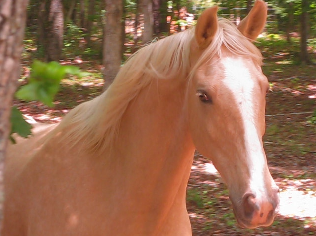 my favorite horse color...