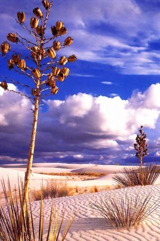 New Mexico Desert Wallpaper