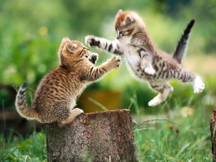 two cats practicing!  :)