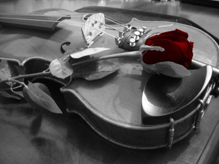 il violino e la rosa rossa