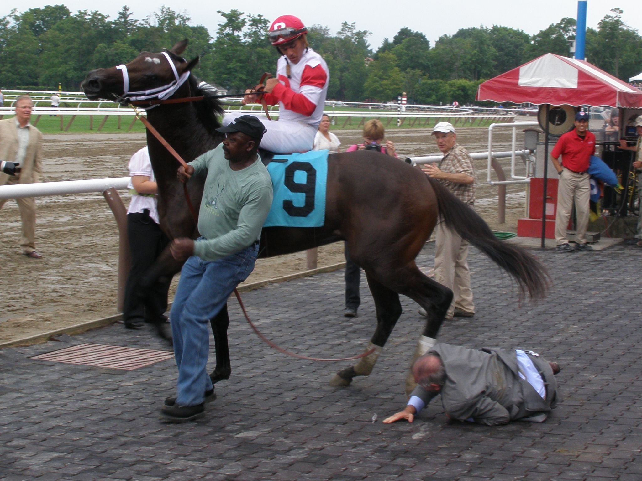 Charming Kitten Breaks His Maiden At Saratoga 7 28 12 But Nearly Tramples His Owner Ken Ramsey In The Winners Circle Lucki Funny Horses Horses Horse Racing