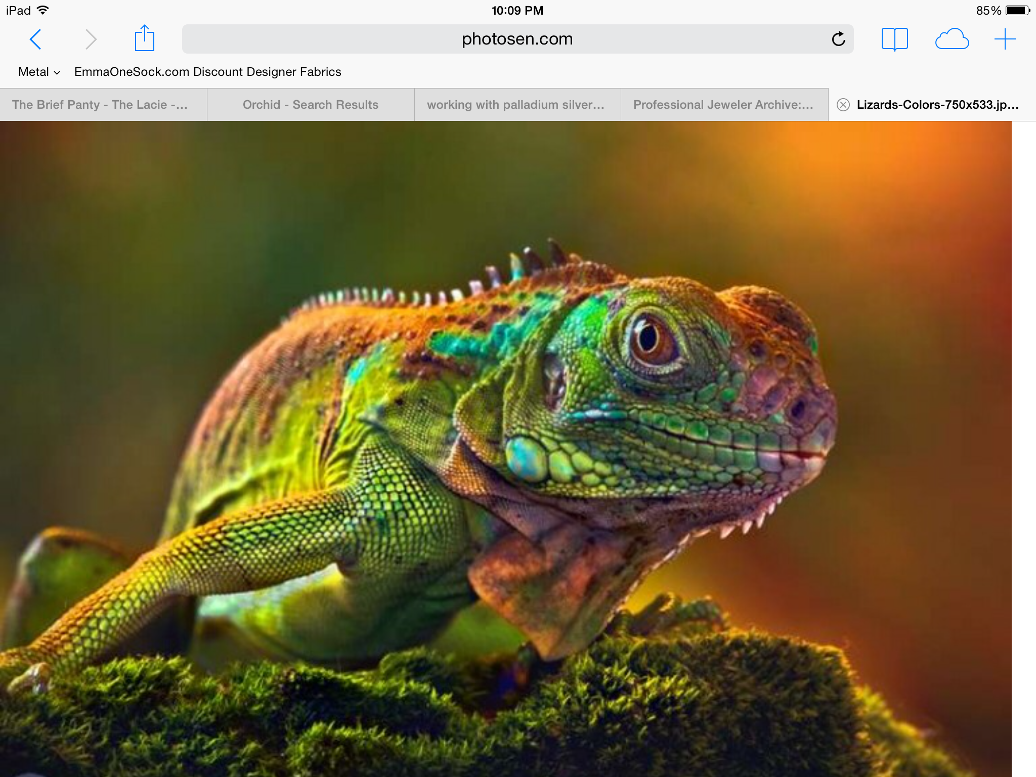 Pin by Cheryl Krismer on Cool lizards Animals beautiful
