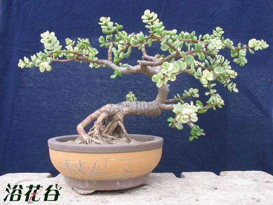 Pin By Le Martin On Bonsai  With Images