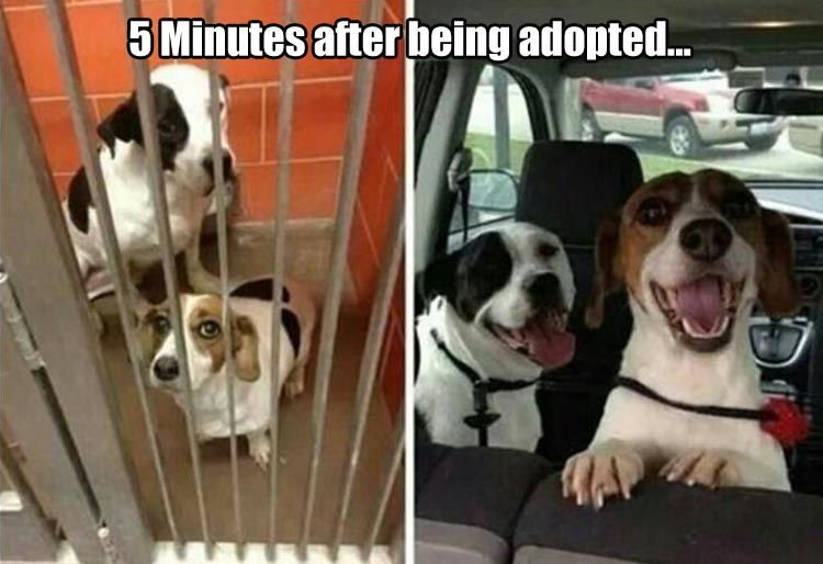 Adopt A Pet Today You Will Make Their Day And You Will Make Your Life Cute Animals Funny Animal Pictures Animals