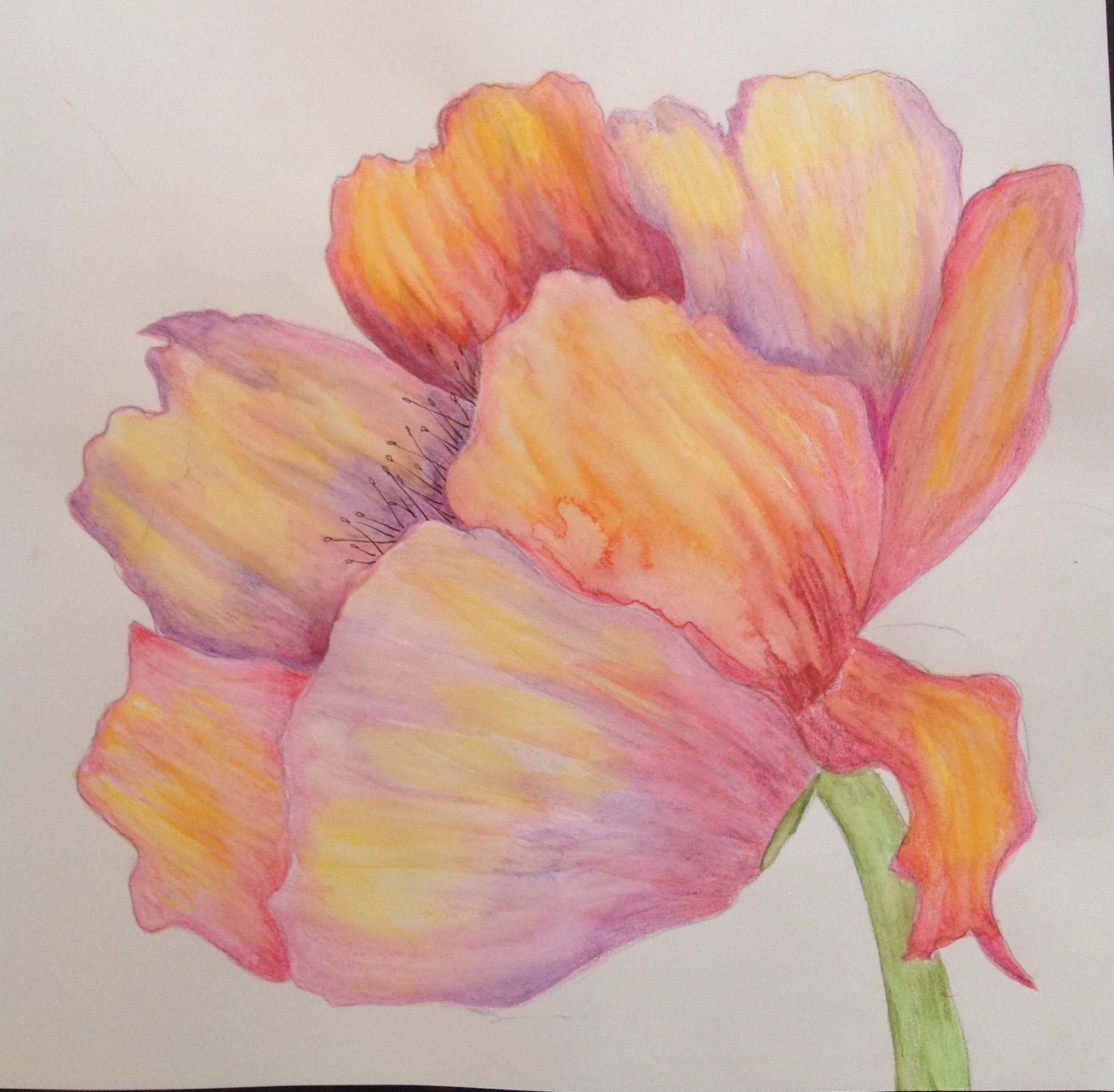 Drawing Using Watercolor Pencil Flower Drawing Art Tutorials
