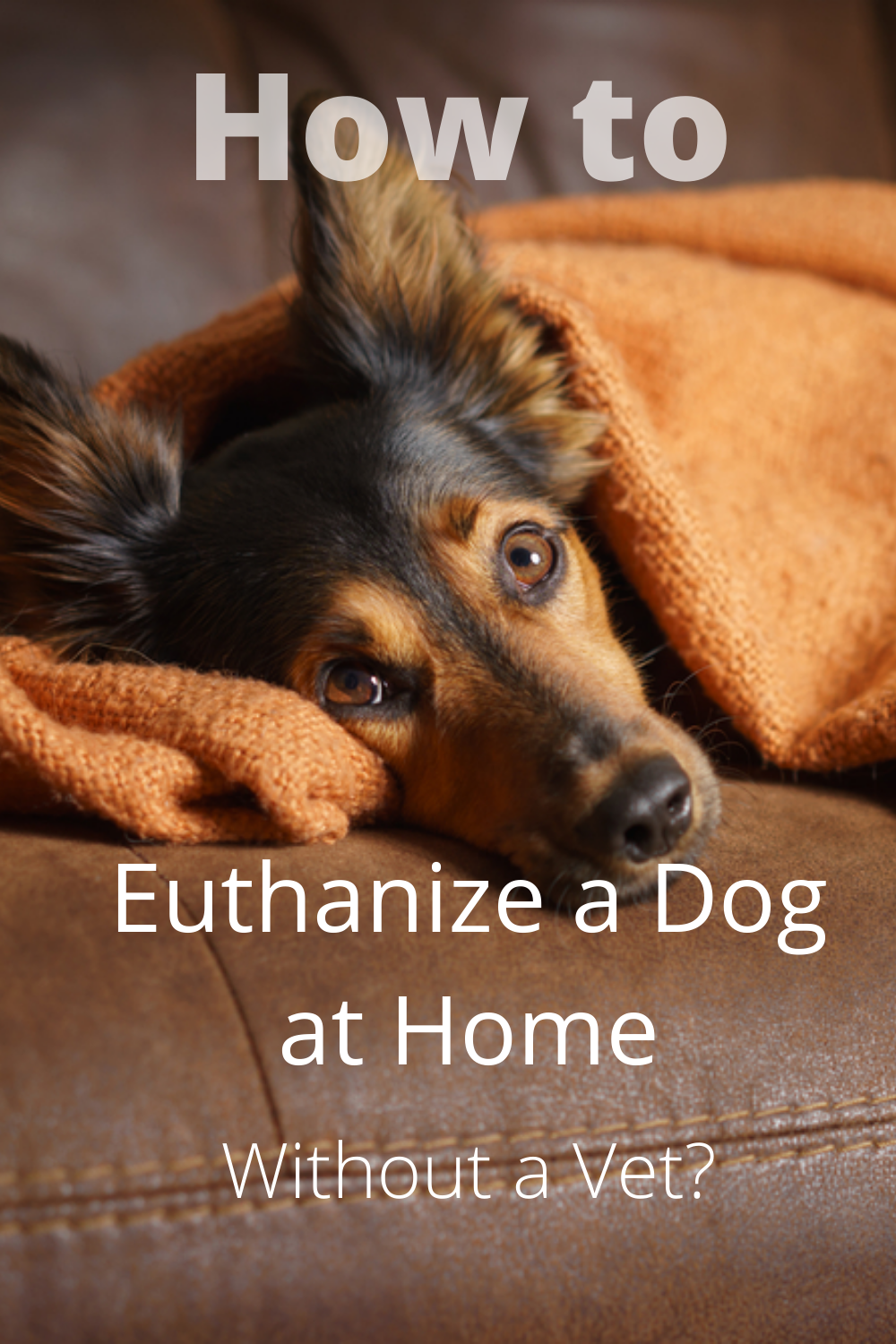 How To Euthanize A Dog At Home Without A Vet In 2020 Vets Dogs Pets