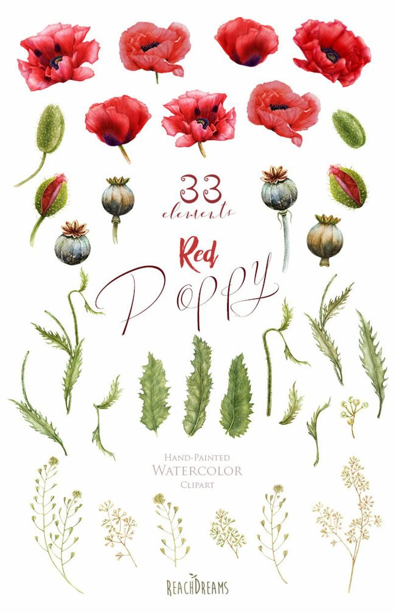 floral frame clipart boho Handpainted elements Watercolor Red Poppy diy clip art poppies flowers greeting card wedding invitations