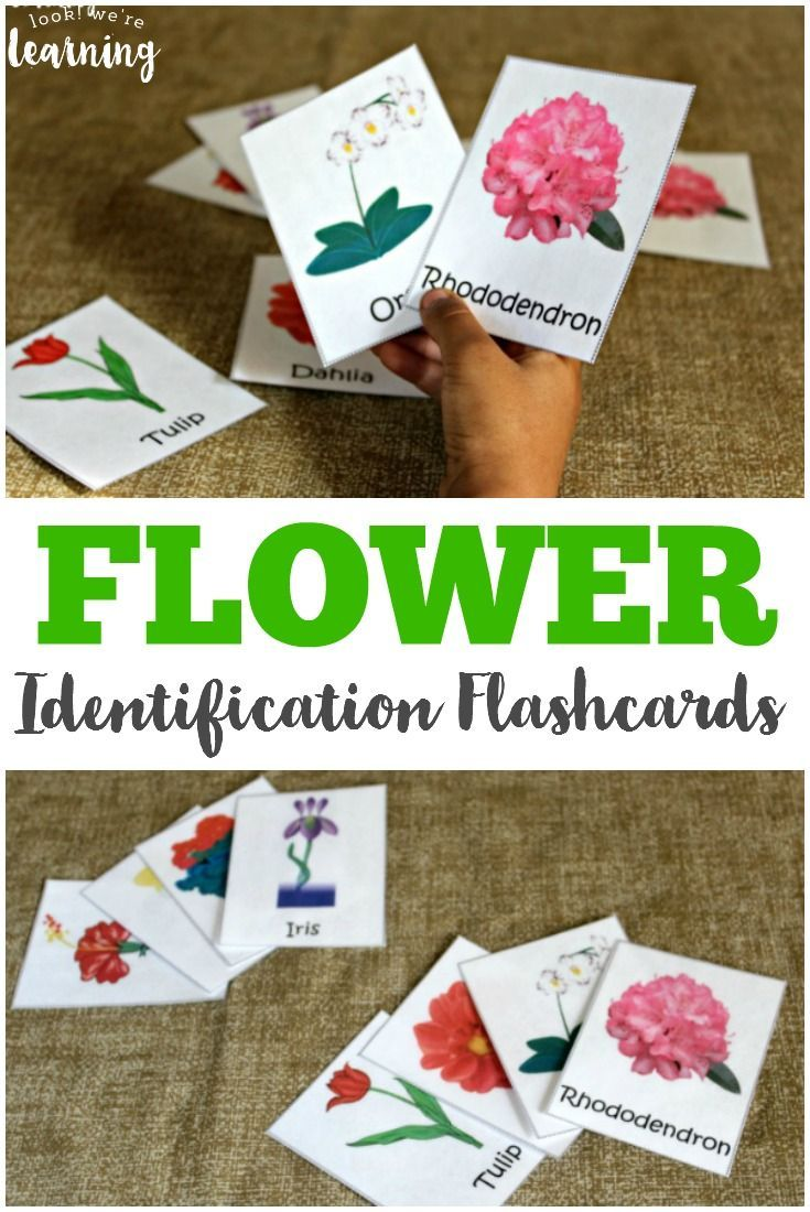 Spring Flower Identification Cards