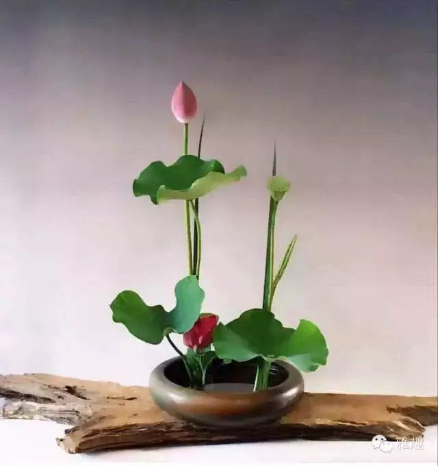 Chinese Flower Arrangement, Lotus In A Dish. Designed By Master Li Lishu Of  Taiwan Part 28