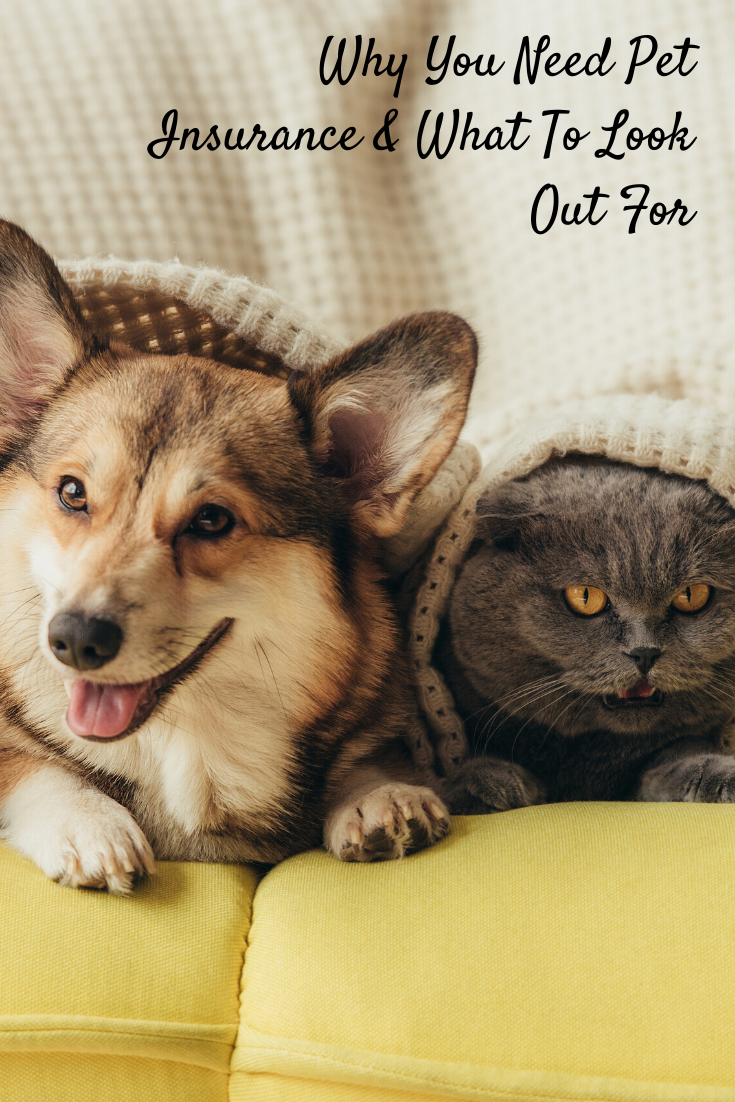 Find out why pet insurance is so important and how not to