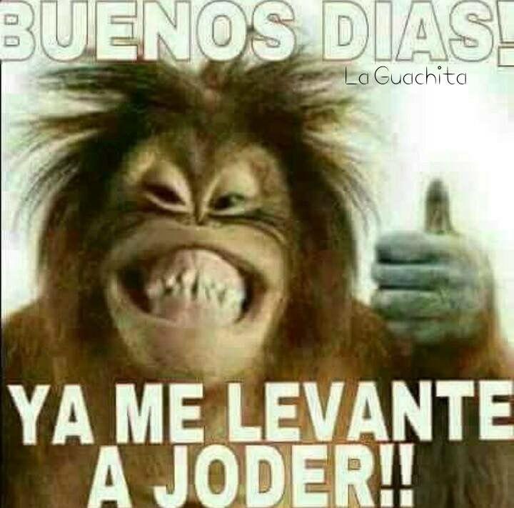 Pin By Manuel Gaytan Jr On Buenos Dias Mexican Funny Memes Funny Spanish Memes New Memes