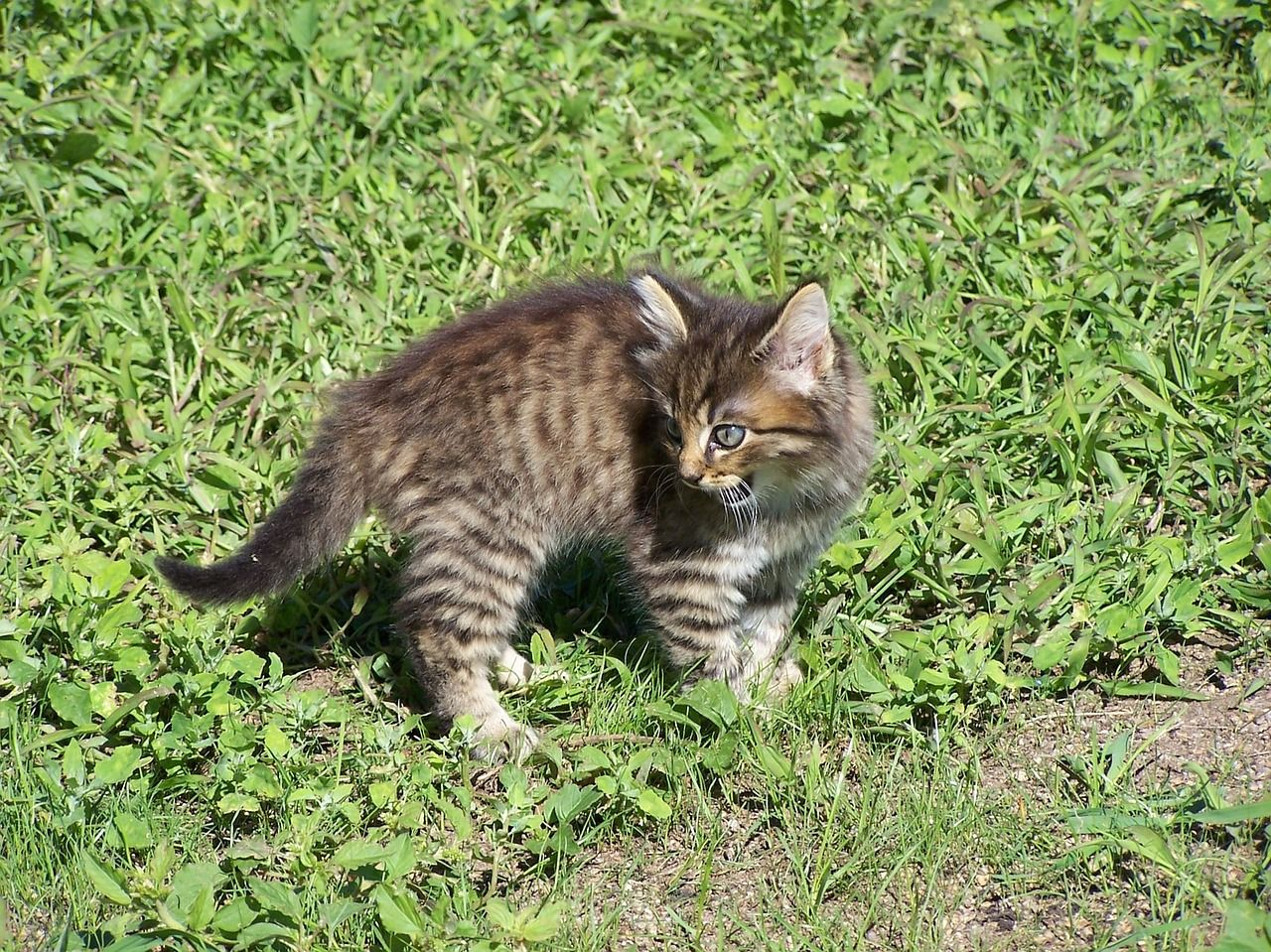 How to Tame a Feral Cat Cat Care Tips Feral cats