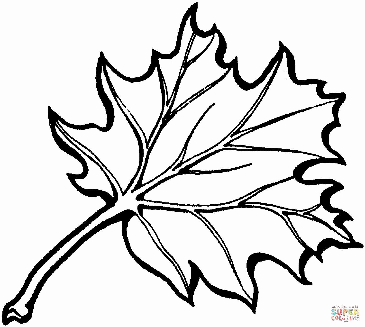 Pin On Example Leave Coloring Pages