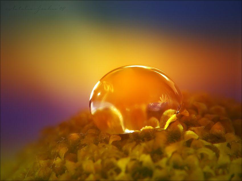 Water-drop on a beautiful yellow flower.