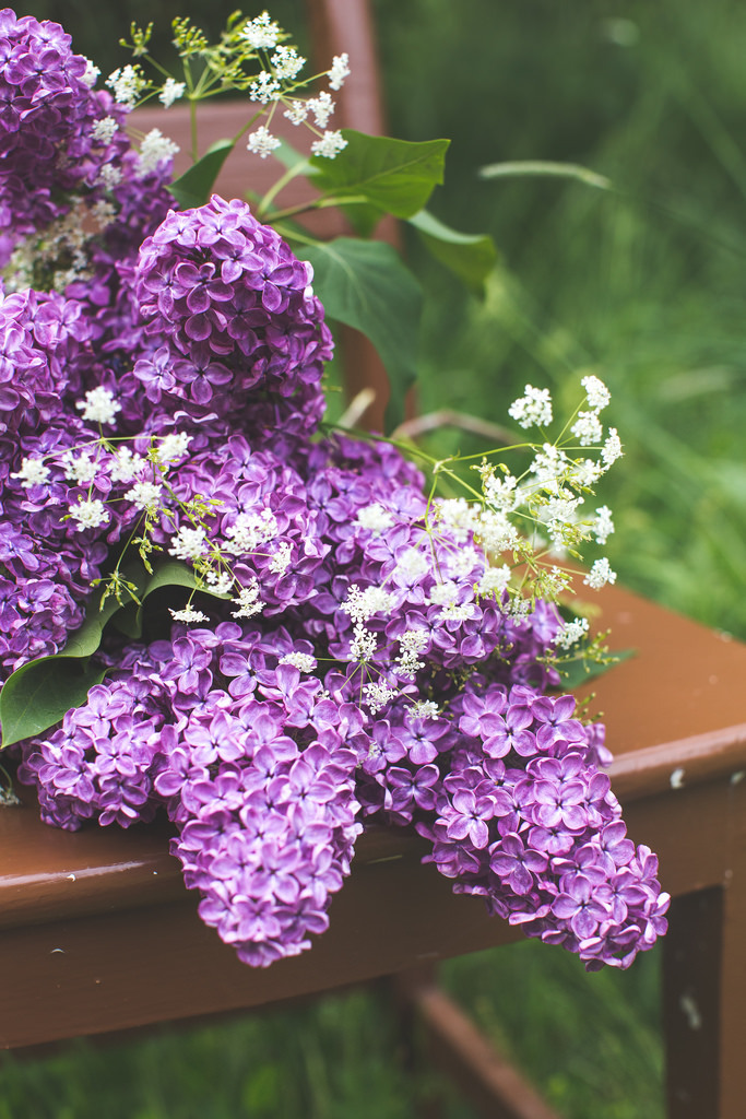 Pin By Yana Sedisheva On Lilacs And Lavender Amazing Flowers Lilac Flowers Pretty Flowers
