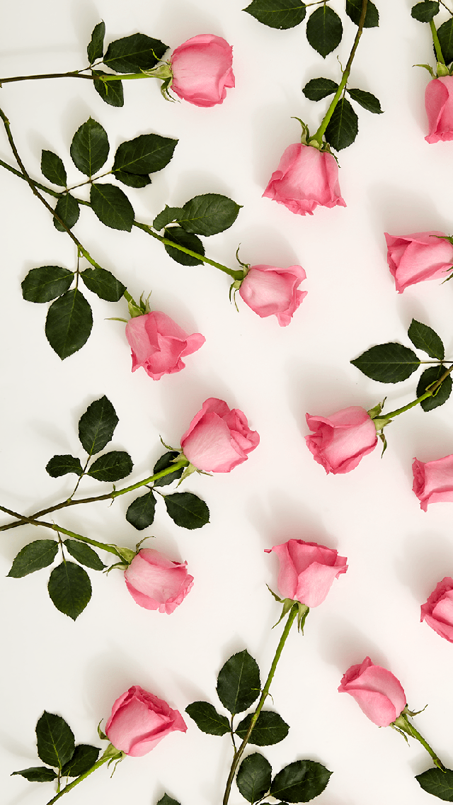 Mengunduh Pink Roses 640 X 1136 Wallpapers 4789000 Pink Roses Love Flowers Mobile9 Rose Wallpaper Flower Wallpaper Iphone Wallpaper Vintage