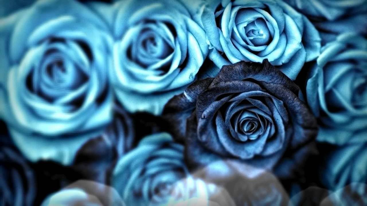 Roses Are Blue Savvy Flowers Pinterest Blue Roses
