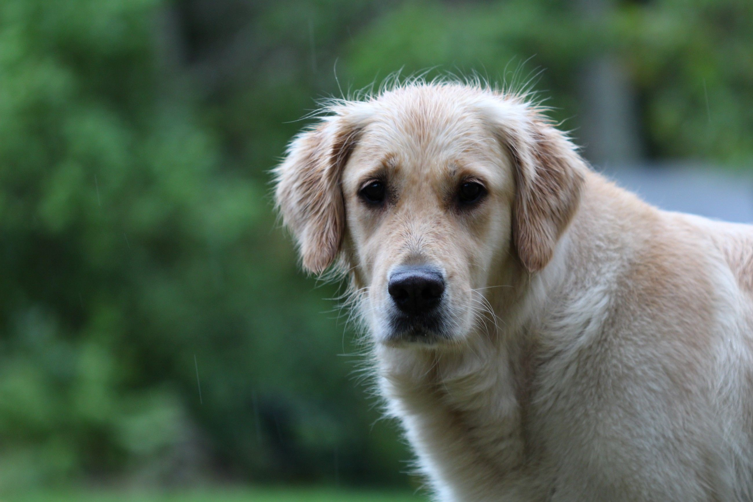List Of Express Body Parser Errors In 2020 Golden Retriever