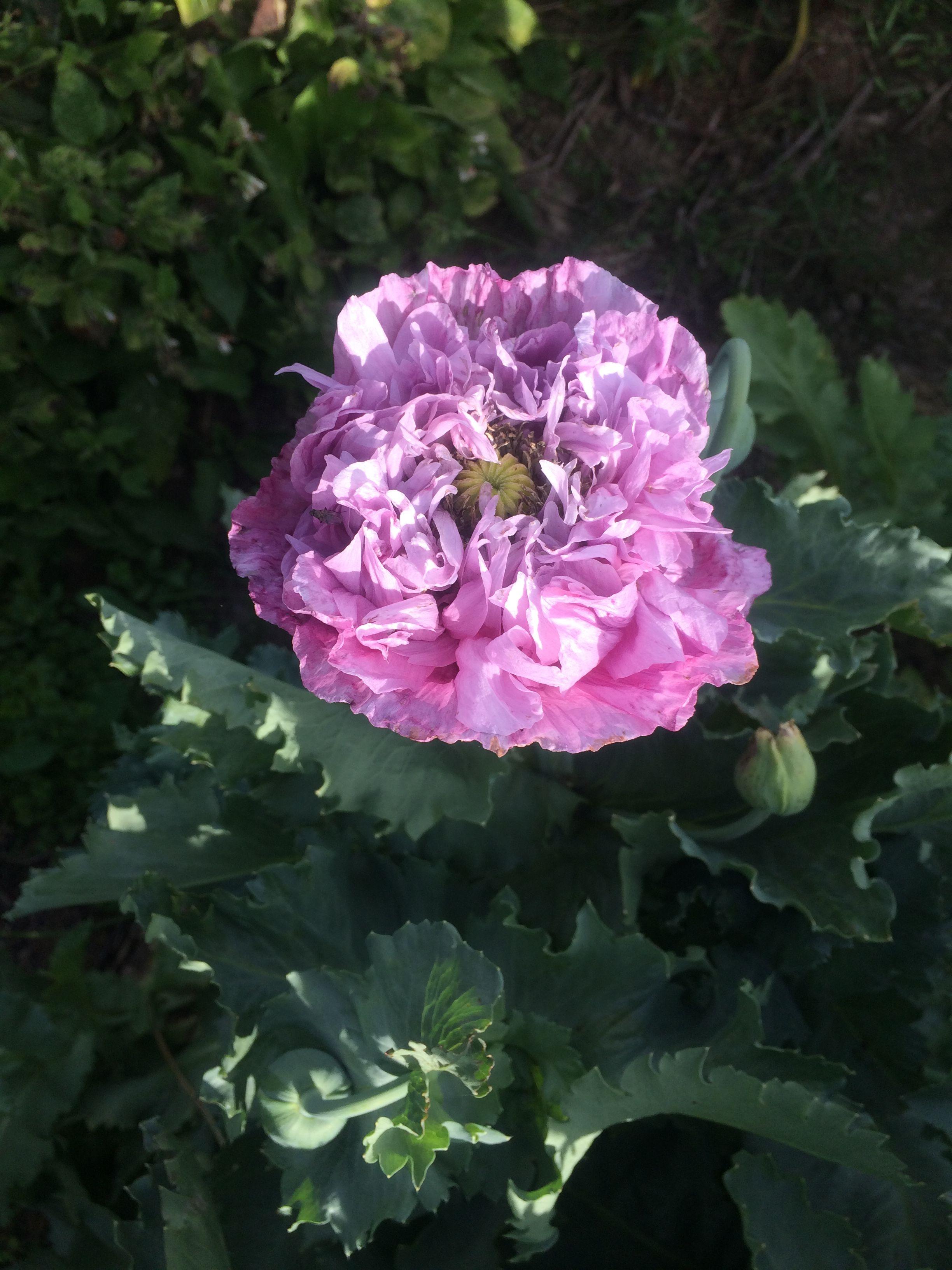 9dea1c4a0fd085fc914a8522c721c2d7 Luxe De Fleurs De Jardin Des Idées