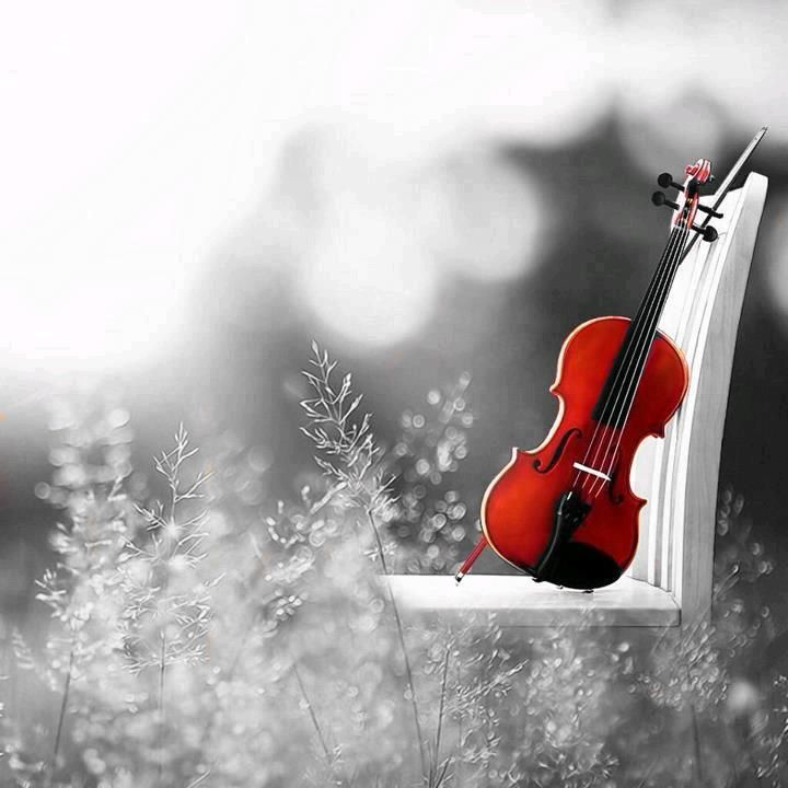 Violin Wallpaper: A TOUCH Of Color